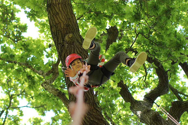 Child descending a tree with Goodleaf Tree Climbing, Isle of Wight
