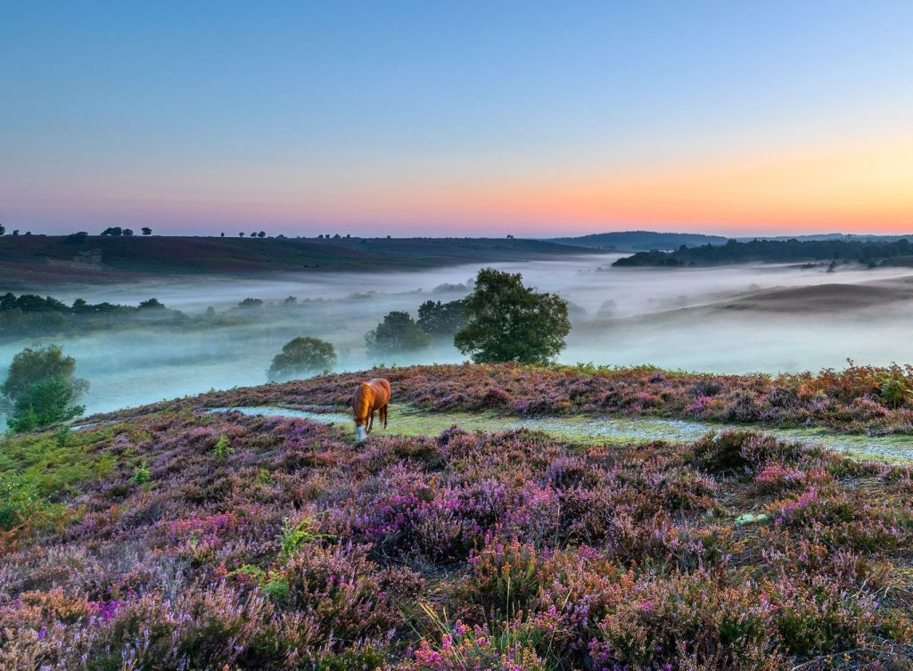 A misty New Forest landscape with pony - thanks to Go New Forest