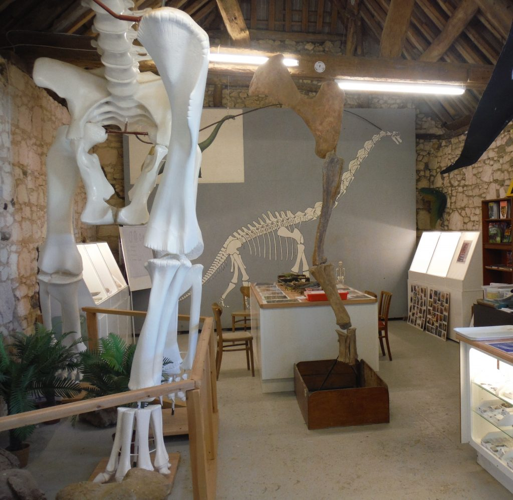 Dinosaur Expeditions Centre - Brachiosaurus skeleton reconstruction and Fossil displays